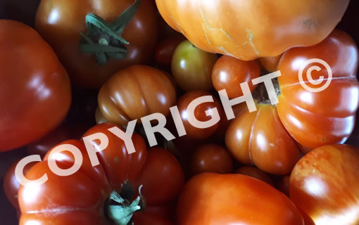 Images and copyright