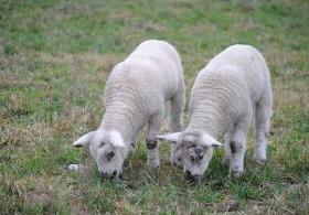 Cloning. Cloning. Cloning.